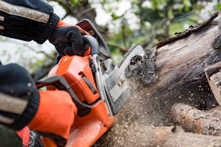 cutting a tree with a chainsaw
