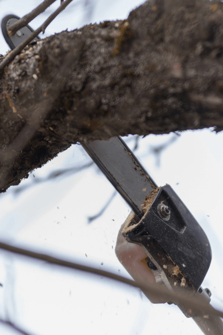 cordless vs corded pole saw